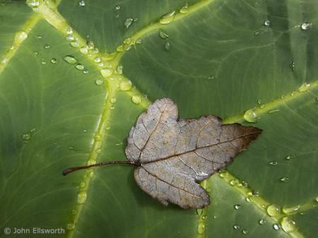 leaf-on-leaf