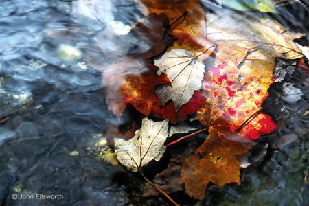 leaves-stream